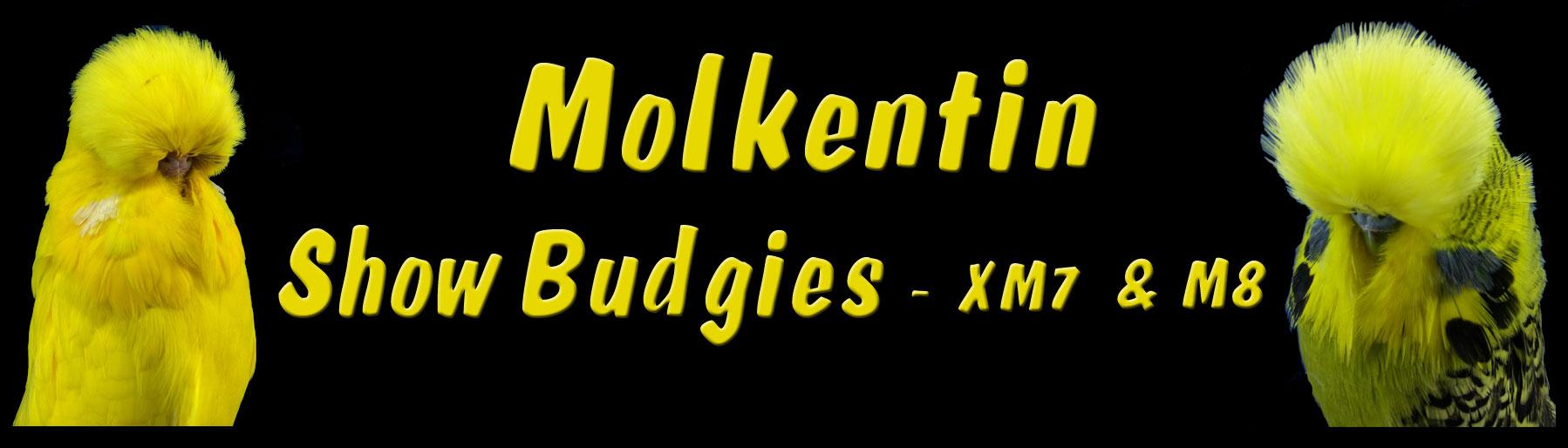 Molkentin Show Budgies – XM7